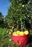 Зеленая предпосылка Яблока Стоковое фото RF