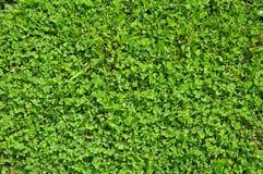 Зеленая предпосылка Стоковое Изображение