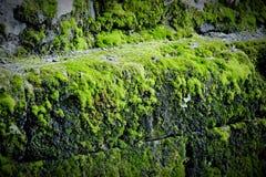 Зеленая предпосылка Стоковое фото RF