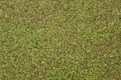 Зеленая предпосылка стоковое фото