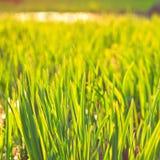 Зеленая предпосылка Eco Стоковые Изображения
