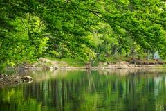 Зеленая природа, ветви дерева над озером в отражении воды Стоковое фото RF