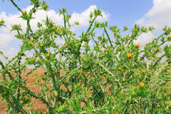 Зеленая природа загородки стоковое изображение