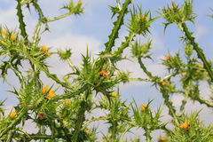 Зеленая природа загородки стоковое изображение rf