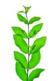 зеленая природа листьев Стоковое Изображение