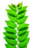 зеленая природа листьев Стоковая Фотография