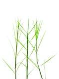 зеленая природа листьев Стоковое фото RF