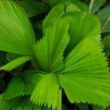 зеленая природа листьев Стоковая Фотография RF