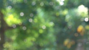 Зеленая природа с bokeh искры сток-видео