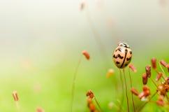 зеленая природа ladybug Стоковое Изображение