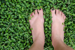 зеленая прогулка Стоковое Изображение