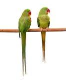 Зеленая птица попыгая Стоковое Изображение RF