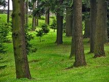 Зеленая пуща Стоковые Изображения