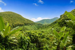 Зеленая пуща Стоковое Изображение