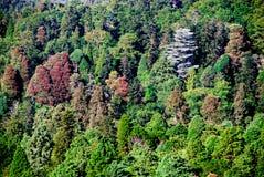 Зеленая пуща Стоковая Фотография RF