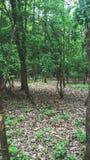 Зеленая пуща Стоковая Фотография