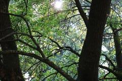 Зеленая пуща Стоковое Изображение RF