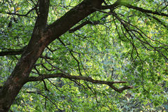 Зеленая пуща Стоковое Фото