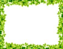 Зеленая рамка хворостин березы Стоковая Фотография RF