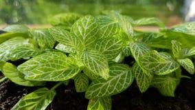 Зеленая расточка Стоковая Фотография