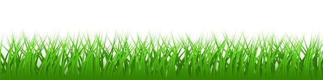 Зеленая реалистическая трава вектора стоковая фотография
