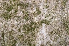 Зеленая ржавая текстура Стоковое Фото