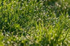 Зеленая росная трава стоковые фото