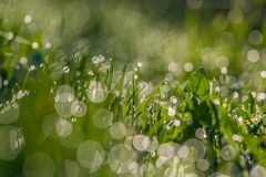 Зеленая росная трава стоковая фотография