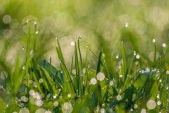 Зеленая росная трава стоковая фотография rf