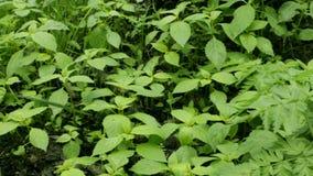 Зеленая свежая трава в красивом виде леса на листве в парке города Всход на слайдере видеоматериал