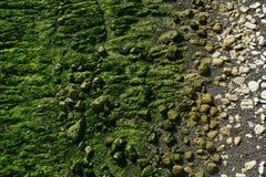 Зеленая серая белизна стоковое фото rf