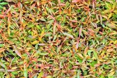 зеленая серия Стоковые Фото
