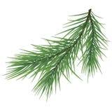 Зеленая сочная елевая ветвь Ветви ели Изолированный на белой иллюстрации предпосылки стоковые изображения rf