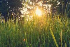 Зеленая сочная трава с падениями росы на стержнях Стоковые Фотографии RF