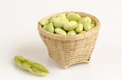 Зеленая соя, горох голубя или род Cajanus Стоковое фото RF