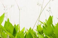 зеленая стена листьев Стоковое Фото