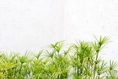 зеленая стена листьев Стоковые Изображения