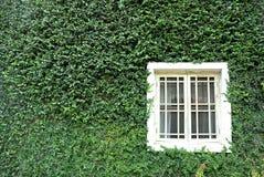зеленая стена Стоковое фото RF