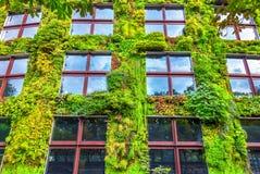 зеленая стена Стоковые Фотографии RF
