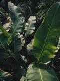 зеленая стена Стоковое Изображение RF