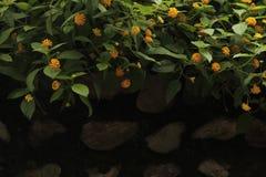 зеленая стена Стоковая Фотография
