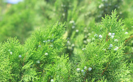 Зеленая сторона ваш разум Стоковое Фото