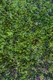 Зеленая съемка вертикали предпосылки лист Стоковое Фото
