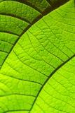 Зеленая текстура лист для предпосылки Картина листьев Селективный фокус Стоковые Фото