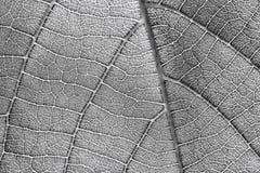 Зеленая текстура картины лист Стоковая Фотография
