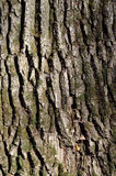Зеленая текстура коры дерева Стоковое Фото