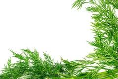Зеленая текстура предпосылки с свежей органической травой укропа с copys Стоковая Фотография