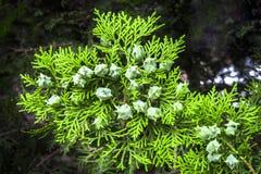 зеленая текстура Стоковое Изображение