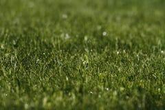 Зеленая толстая трава Стоковые Фотографии RF