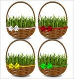 Зеленая трава в красивой зеленой корзине с смычком Стоковое Фото